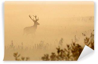 Vinylová Fototapeta Jelen s velkými parohy stojí na louce na mlhavého rána
