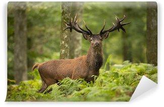 Fototapeta Winylowa Jeleń w lesie