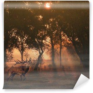 Vinylová Fototapeta Jeleni v lese na podzim při východu slunce