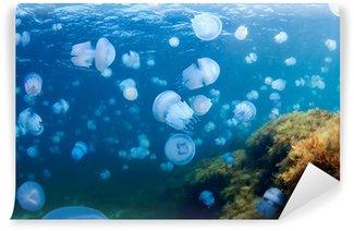 Vinylová Fototapeta Jellyfishes (Kořenoústka Plicnatá), v Černém moři.