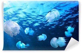 Vinylová Fototapeta Jellyfishes plovoucí v modré vodě, Černé moře