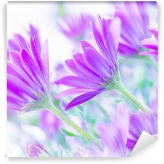 Vinylová Fototapeta Jemné růžové sedmikrásky květiny