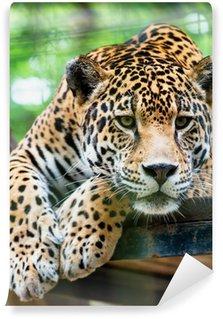 Vinylová Fototapeta Jižní Ameriky jaguar