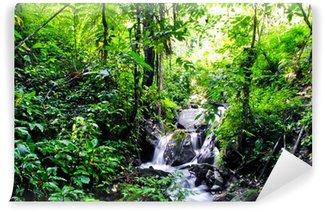 Vinylová Fototapeta Jungle v Tentena