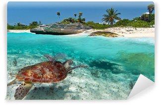Vinylová Fototapeta Karibské moře krajina s zelená želva v Mexiku