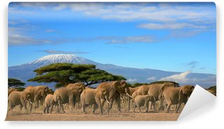 Vinylová Fototapeta Kilimanjaro S Elephant Herd