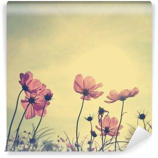 Vinylová Fototapeta Klasické Cosmos květiny v době západu slunce