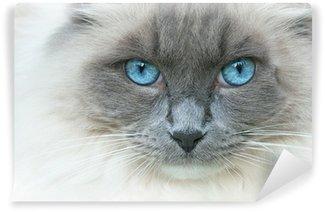 Vinylová Fototapeta Kočku jménem Elvis