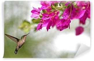 Vinylová Fototapeta Kolibřík, který butine květiny v Guadeloupe