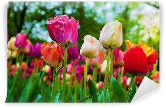 Fototapeta Winylowa Kolorowe kwiaty tulipanów w parku wiosną, ogród