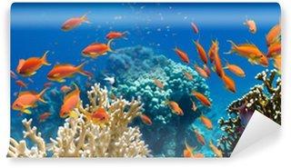 Fototapeta Vinylowa Koral i ryb