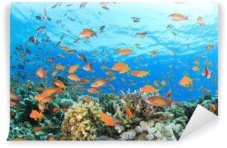 Vinylová Fototapeta Korálový útes pod vodou