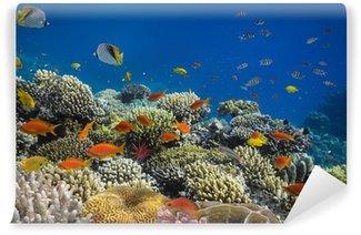 Vinylová Fototapeta Korálový útes ryby ve vodě