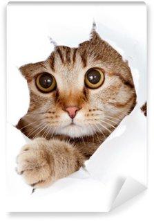 Fototapeta Winylowa Kot patrząc w stronę papieru podarte izolowane otworu