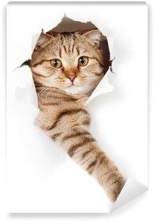 Fototapeta Vinylowa Kot w białym tapety dziury