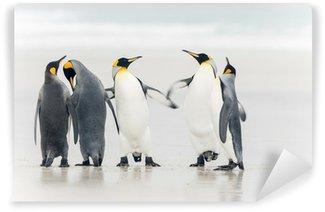 Vinylová Fototapeta Král penguin