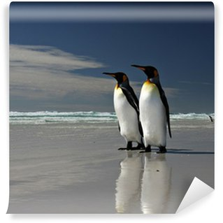 Vinylová Fototapeta Král Penguins na Volunteer Point