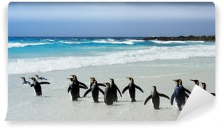 Vinylová Fototapeta Král Penguins