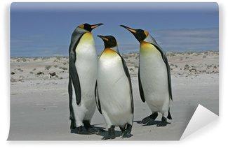 Vinylová Fototapeta Král tučňák (aptenodytes patagonicus)