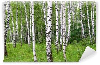 Vinylová Fototapeta Krásná bříza letního lesa