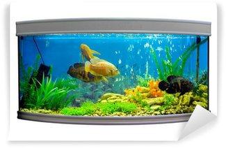 Vinylová Fototapeta Krásná půlkruhové akvárium s tropickými rybami na bílém pozadí