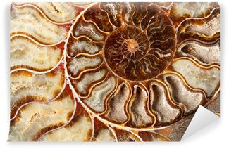 Vinylová Fototapeta Krásné ammonitský minerální
