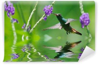Vinylová Fototapeta Krásné kolibřík v odrazu