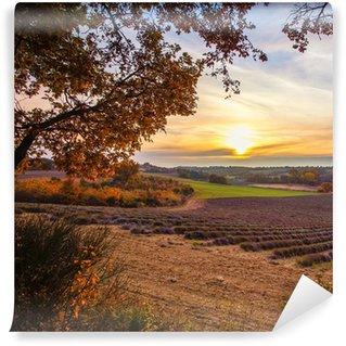 Vinylová Fototapeta Krásné podzimní levandule pole