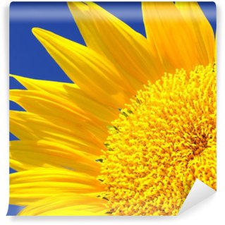 Vinylová Fototapeta Krásné slunečnice proti modré obloze