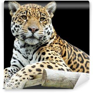Vinylová Fototapeta Krásné tygr closeup, izolovaných na černém pozadí