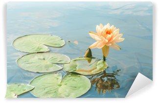 Vinylová Fototapeta Krásné žluté leknín, vodní rostliny rostou v rybníku