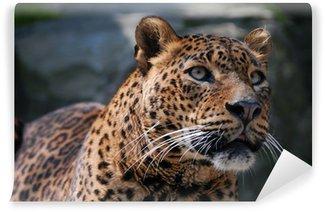 Vinylová Fototapeta Krásný leopard