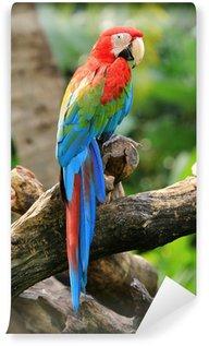 Vinylová Fototapeta Krásný papoušek