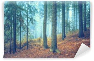 Vinylová Fototapeta Krásný zasněný jehličnan prales. Barevný efekt filtru použity.