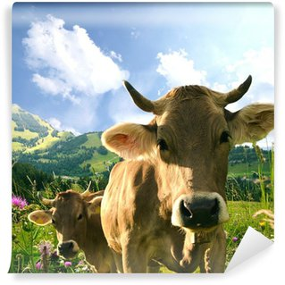 Vinylová Fototapeta Krávy