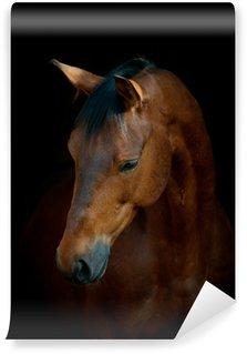Vinylová Fototapeta Kůň na černém