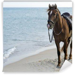 Vinylová Fototapeta Kůň na pláži