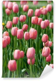 Vinylová Fototapeta Kvetoucí růžové tulipány