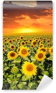 Vinylová Fototapeta Kvetoucí slunečnice