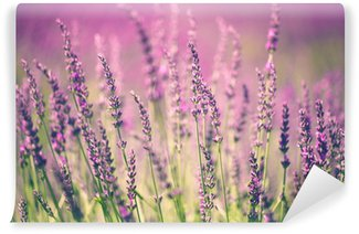 Fototapeta Vinylowa Kwiat lawendy