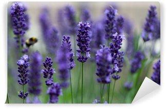 Fototapeta Vinylowa Kwiaty lawendy