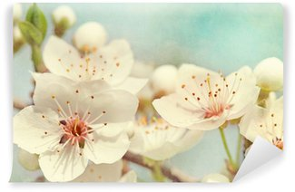 Fototapeta Vinylowa Kwiaty wiśni