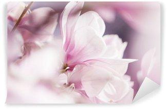 Fototapeta Winylowa Kwitnąca magnolia