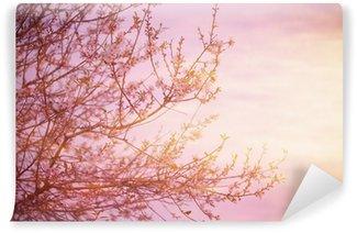 Fototapeta Winylowa Kwitnące drzewa na zachodzie słońca