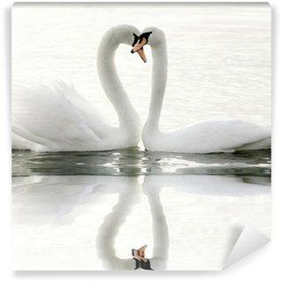 Vinylová Fototapeta Labutě na jezeře