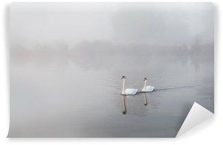 Vinylová Fototapeta Labutí Cygnus olor klouzání přes mlhu na něž jezero za svítání