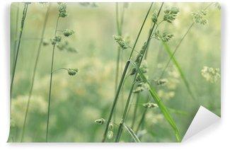 Fototapeta Winylowa Łąka chwastów trawa w lecie