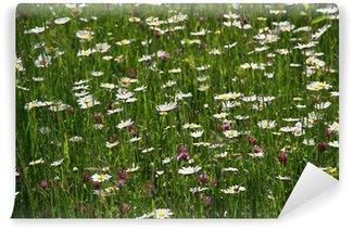 Fototapeta Winylowa Łąka, trawa, kwiaty