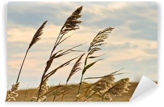 Fototapeta Winylowa Łąka trawa na suchym terenie, na ciemnym niebie i deszczowe chmury