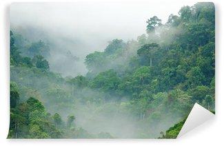 Fototapeta Winylowa Las deszczowy poranek mgła